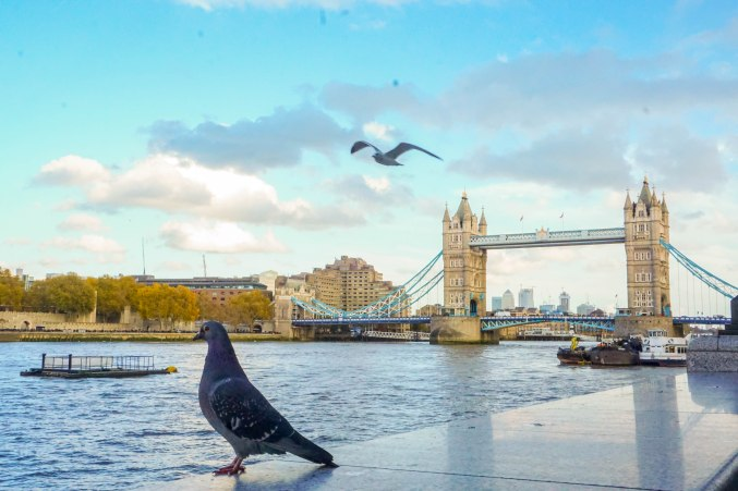 Editted - Tower Bridge Bird (1 of 1)